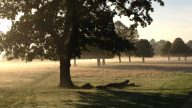 richmond-park-misty-october-morning1