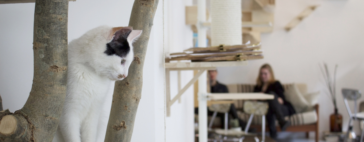 Kopjes cat cafe in Amsterdam