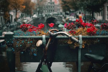 10 Things To Do Alone in Amsterdam | Clink Hostels