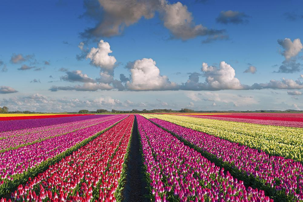 Keukenhof Gardens | Top things to do in Amsterdam this spring | Clink Hostels